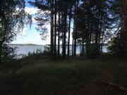 Участок 5 Га с соснами на 1 береговой линии р. Волга, д. Карачарово. - Фото 3