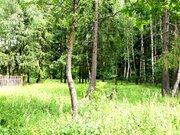 Участок с лесными деревьями д. Новинки 47км. от МКАД по Дмитровскому ш - Фото 3