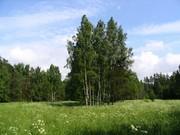 Продаю участок, ш. Горьковское, 60 км, Васютино д. - Фото 5