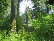 Продаю лесной уч-к 12 сот. в п.Ильинский, ПМЖ, ИЖС, центр. коммуникац. - Фото 3