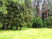 Участок с лесными деревьями д. Новинки 47км. от МКАД по Дмитровскому ш - Фото 4