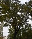 18 985 920 руб., Продажа квартиры, Купить квартиру Рига, Латвия по недорогой цене, ID объекта - 313139251 - Фото 2