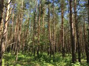 Лесной участок 12 соток ИЖС - Фото 2
