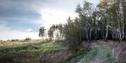 Участок 20 соток в лесу д. Репниково, Чеховский район. - Фото 4