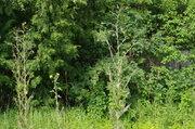 Продается дом 29 м на участке 16 сот в деревне Крутовец - Фото 2