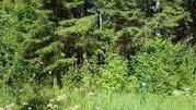 Шикарный лесной участок в пос. от Мин. Обороны. Тихое, красивое место. - Фото 3