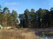 Кратово, жуковская сторона, 50 соток у озера - Фото 4