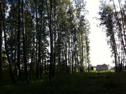 Участок 18 сот с соснами , в 5 км от г.Чехов, д.Б.Петровское. - Фото 4