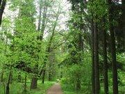 Лесной участок в стародачном месте - Фото 5