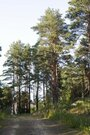 Красивый участок, ш. Горьковское, 50 км, Алексеево д. - Фото 4