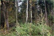 Участок под ИЖС рядом с Зеленоградом - Фото 2