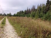 Участок у леса - Фото 1