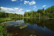 Красивый участок на границе леса у берега озера - Фото 1
