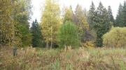 Продаётся лесной участок 44 сотки Солнечногорский район д.Николаевка - Фото 2