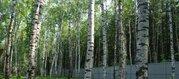 Лесной участок с выходом в лес 20 соток. Москва. - Фото 3