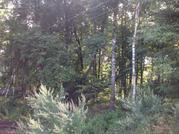 Участок с лесными деревьями 6 соток в с. Талеж - Фото 5
