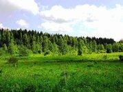 Участок 48га, кфх, д. Шепелево, Сергиево-Посадский р-н, Ярославское - Фото 1