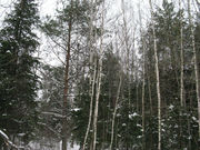 Район деревни Сальково СНТ «Поречье» Лесной участок 24.2 сотки. - Фото 2