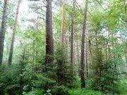 Участок в лесу у реки - Фото 2