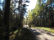 Продается прекрасный лесной участок с соснами под ИЖС в р-не Петушков - Фото 4