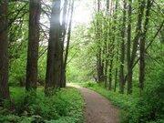 Лесной участок в стародачном месте - Фото 4