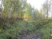 Участок 20 соток с лесом в п.Минино - Фото 4