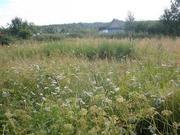 Участок в садоводстве в 8 км от Выборга Цена 470 т.р. - Фото 1
