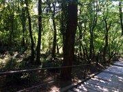 Продается участок 6 соток в экологически чистом районе Ялты - Фото 4