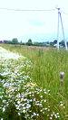 Земля ИЖС 10 соток, красивое место, деревня, коммуникации - Фото 2