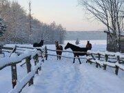 Уютный коттедж на огромном участке, лес, озеро, конюшни в пос. Светлое - Фото 5