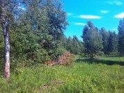 Участок 11 соток, 52 км от МКАД, ПМЖ в д. Асташково, эл-во, соснов.лес - Фото 3