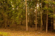 Земельный участок в лесу, 15 соток, 1,25 млн. рублей, Дмитровка - Фото 3