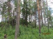 Участок с лесными деревьями - Фото 4