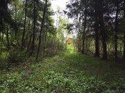 Лесной массив 27 Га с вековыми елями, соснами и березами в деревне - Фото 5