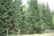 Продается лесной участок, Минское - Можайское шоссе, район Голицыно - Фото 1