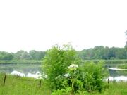 Участок на берегу реки 66 соток по Минскому шоссе. 75 км от МКАД - Фото 3
