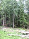 15 соток в лесу д.Матвейково Ступинского района - Фото 2