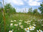 Земля на берегу Десногорского водохранилища в Смоленской области - Фото 3