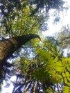 Продается прекрасный лесной участок с соснами под ИЖС в р-не Петушков - Фото 3