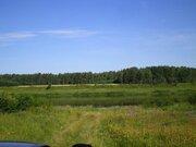 Участок 82 га, первая линия р.Волга, Сосновый лес, газ - Фото 1