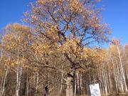 Дом 2 эт. 8х8м, на уч. 10 сот. д. Рыжиково 10 км от Чехова и Серпухова - Фото 2