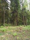 Лесной Земельный участок 10 сот по Рогачевскому шоссе, дер Поповка - Фото 3