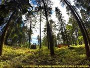 25 соток ИЖС соснового леса в пос. Судаково, Приозерский район. - Фото 1