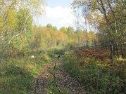 Участок 20 соток с лесом в п.Минино - Фото 3