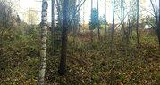 Участок в лесном СНТ Куристалл район д. Клетки Волоколамского района - Фото 5