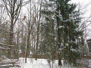 Минское ш. 20км. хутор Рожновка лесной участок 15 соток ИЖС - Фото 5