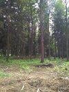 Лесной Земельный участок 10 сот по Рогачевскому шоссе, дер Поповка - Фото 1