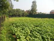 Продается красивый уч. земли в Щелковском р. со всеми коммунникациями - Фото 2