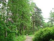 Лесной участок в стародачном месте - Фото 1