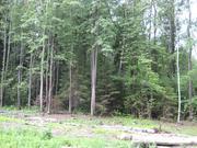 15 соток в лесу д.Матвейково Ступинского района - Фото 1